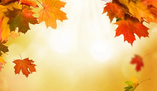 Autumn Recipes